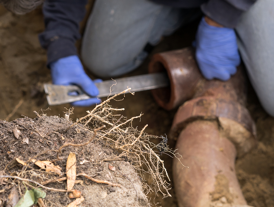 Man Digging Tree Roots Out Of Old Clogged Clay Ceramic Sewer Pip